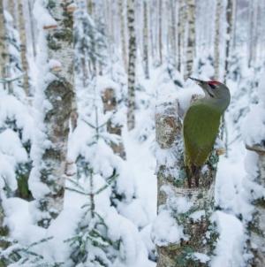 Looduse Aasta Foto 2014 – lisapäevad tööde esitamiseks