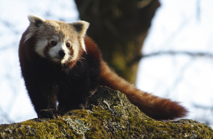 Piilume kardinate taha – Mozilla Firefox 4