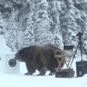 Suur karu üllatab Samsungi EcoBubble reklaami võttegruppi